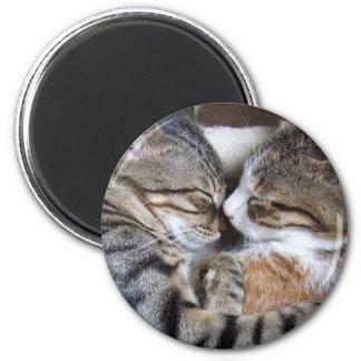 Cat Love Magnet