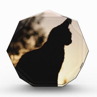 Cat lover award