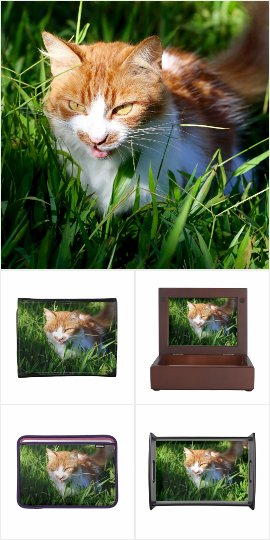 Collection of cat lover gifts - products with cat photos