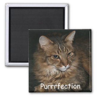 Cat Lover Magnet