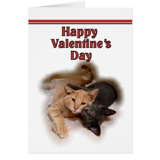Cat Lovers Happy Valentine's Day  Card