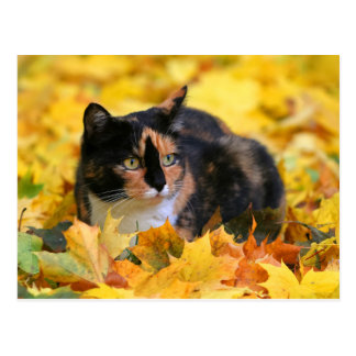 Cat luck cat tricolor schildpatt in the autumn postcard
