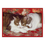 Cat Luv #12 Note Card