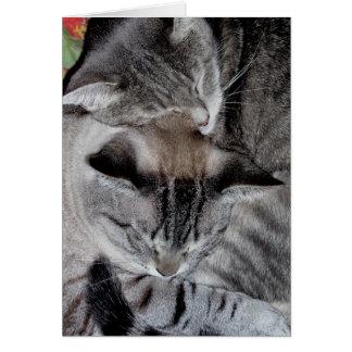 """Cat Luv #2"" Greeting Card"