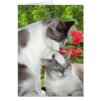 """Cat Luv 3"" Greeting Card"