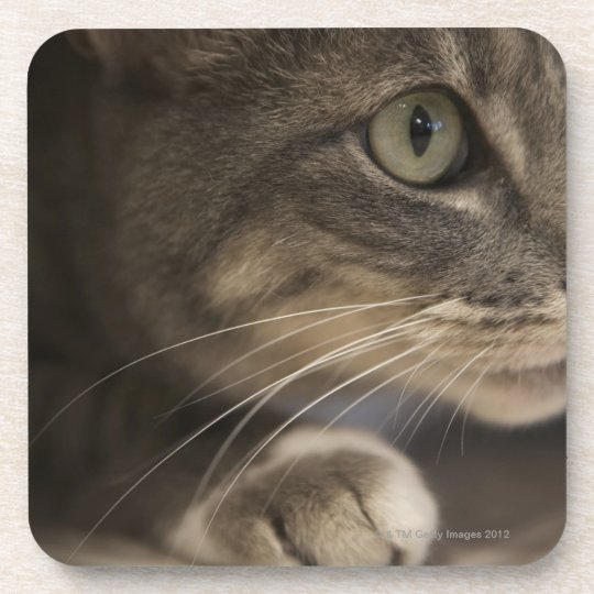 'Cat lying down, close-up (focus on cat's face)' Drink Coaster