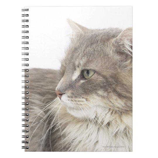 Cat lying down notebook