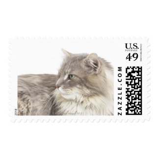Cat lying down postage
