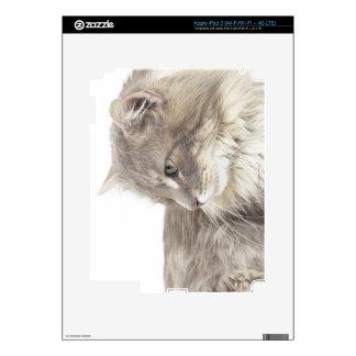 Cat lying down skins for iPad 3