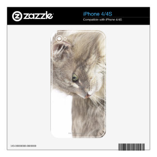 Cat lying down skins for iPhone 4