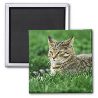 Cat lying in grass 2 inch square magnet