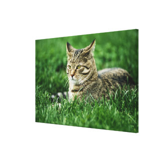 Cat lying in grass canvas print