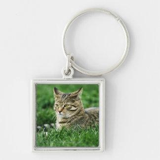 Cat lying in grass keychain