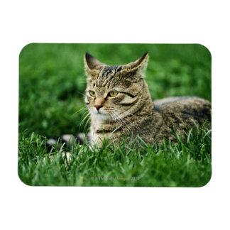 Cat lying in grass rectangular photo magnet
