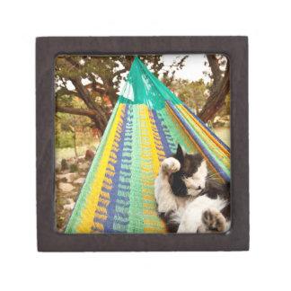Cat lying in Mayan Mexican hammock Jewelry Box