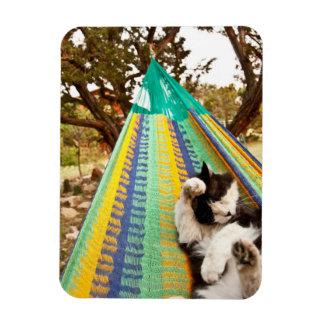 Cat lying in Mayan Mexican hammock Magnet