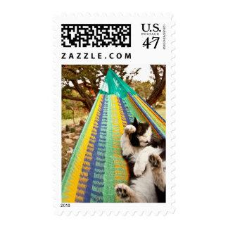 Cat lying in Mayan Mexican hammock Postage