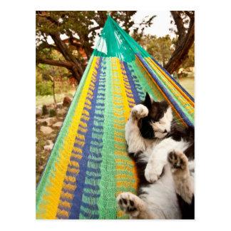 Cat lying in Mayan Mexican hammock Post Card
