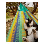 Cat lying in Mayan Mexican hammock Posters