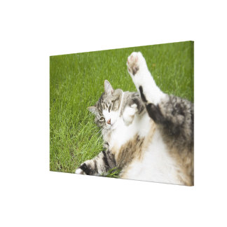 Cat lying on grass close-up gallery wrap canvas