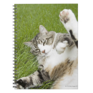 Cat lying on grass, close-up notebook