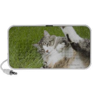 Cat lying on grass, close-up portable speaker