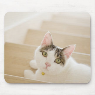 Cat lying on stairs mouse pad