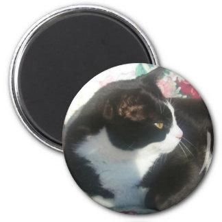 Cat Magmet 2 Inch Round Magnet
