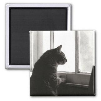Cat Magnet #2