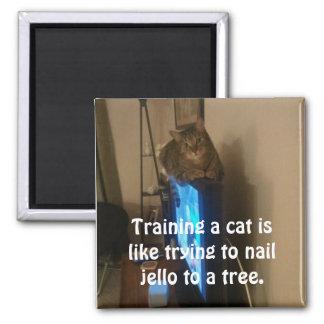 Cat Magnet:  Training a Cat 2 Inch Square Magnet