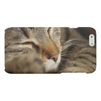 cat matte iPhone 6 case