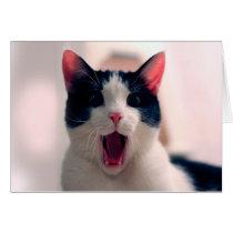 Cat meme - cat funny - funny cat memes - memes cat
