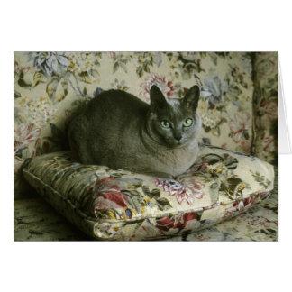 Cat, Minnie, Tonkinese. Card