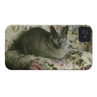 Cat Minnie Tonkinese Blackberry Bold Covers