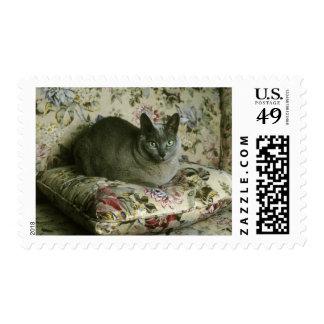 Cat Minnie Tonkinese Postage