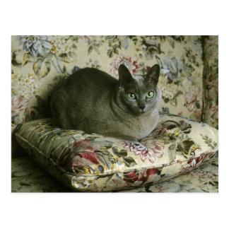 Cat, Minnie, Tonkinese. Postcard