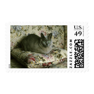 Cat, Minnie, Tonkinese. Stamps
