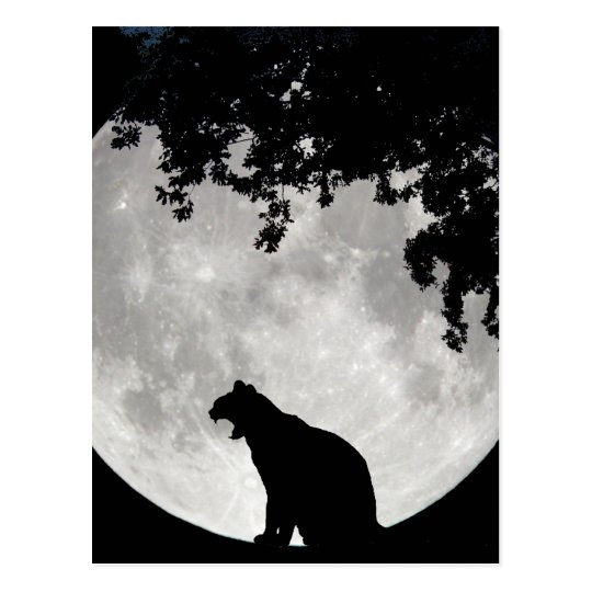 Cat Moon and Branches Postcard