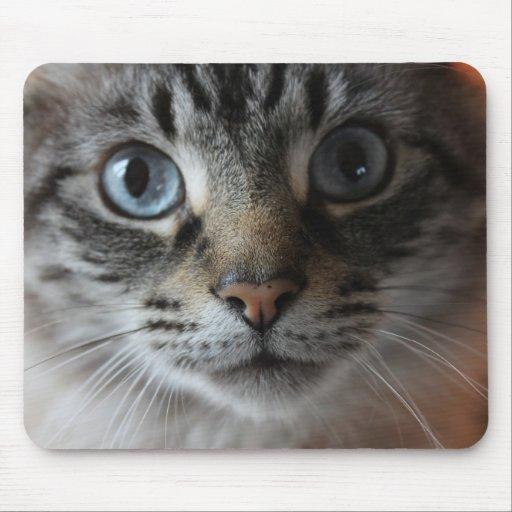 Cat mouse mat 0001