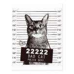 cat mugshot ポストカード