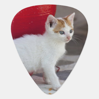 Cat, Mykonos, Greece Guitar Pick