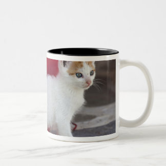 Cat, Mykonos, Greece Two-Tone Coffee Mug