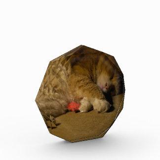 Cat Nap Acrylic Award