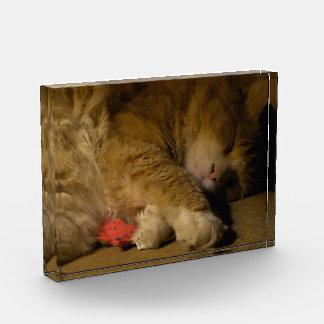 Cat Nap Award