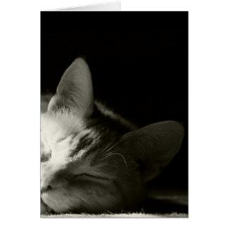 """Cat Nap"" Greeting Cards"