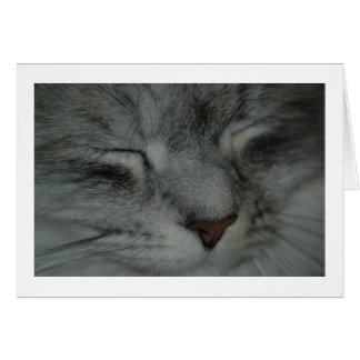 Cat nap cards