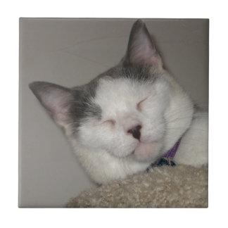 Cat Nap Ceramic Tile