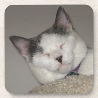 Cat Nap Drink Coaster