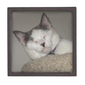 Cat Nap Gift Box