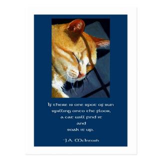 CAT NAP IN SUNSHINE (ART) POSTCARD